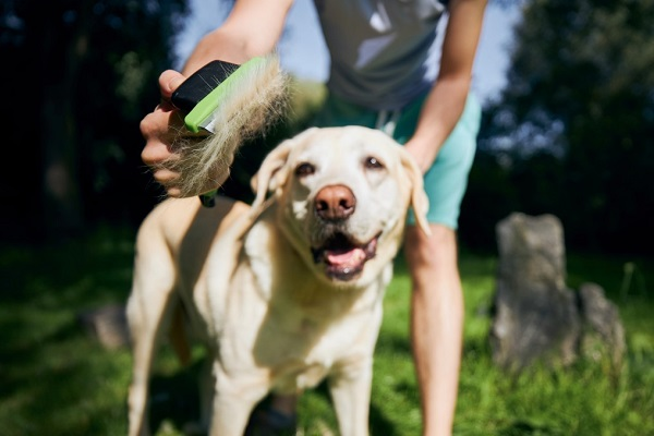 10 Most Professional Dog Grooming Tips For You