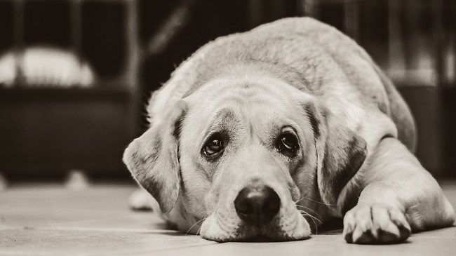 30 Percent Dogs Held Captive In IIT Madras Die In One Year