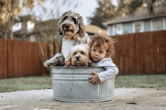 5 Fun Things to do With Your Dog