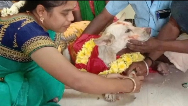A Family In Tamil Nadu Throws A Baby Shower For Pet Dog