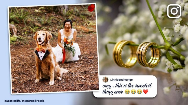 An Oregon Bride Creates A First Look Wedding Photo With Her Pet Dog