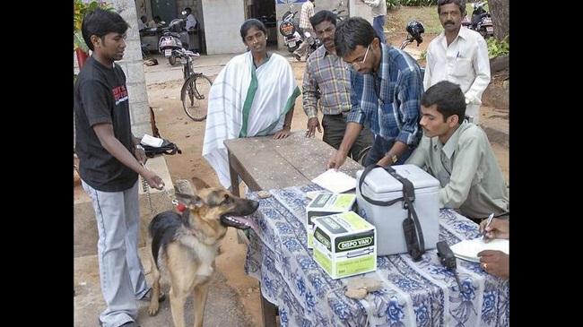 BBMP Makes Pet Dog Registration And Licenses Compulsory