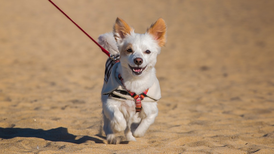 C.D.C. Rules To Make Travelling With Pets Difficult in the U.S.
