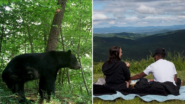 Dog And Its Owners Attacked By A Bear In North Carolina, US