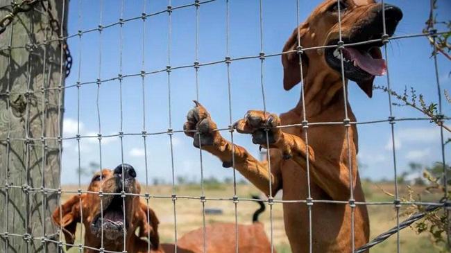 Dog Safety Bill Advances In Texas State Legislature