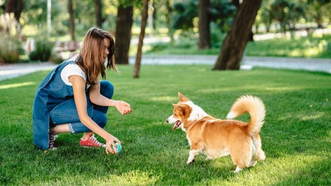 Going To A Dog Park Could Be Risky In The US! Hookworms Evolve To Resist All Treatments