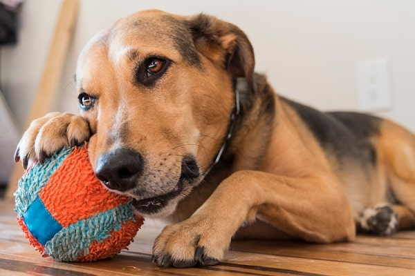 How I Can Stop A Dog Or Puppy From Chewing