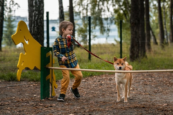Quick and Simple Tips for Professional Results When You Train Your Dog