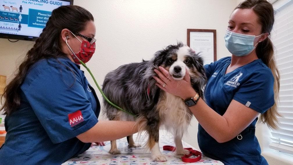 Regular veterinary visits