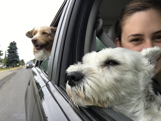 Traveling with dog could become a problem